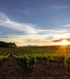 Les vignes d'altitude, une solution face au réchauffement climatique en Espagne